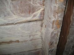 There Is White Mold in The Basement Should I Be Concerned? #White_Mold_in_The_Basement