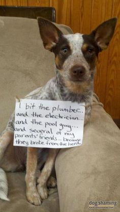 dog shaming | WILL herd youI bite the plumber…and the electrician…and the pool ...