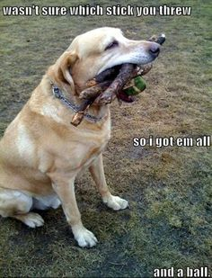 Mind Blowing Facts About Labrador Retrievers And Ideas. Amazing Facts About Labrador Retrievers And Ideas. Animal Captions, Funny Captions, Funny Memes, Dog Memes, Funny Animals With Captions, Videos Funny, Viral Videos, Humor Animal, Animal Memes