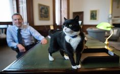 Here's Palmerston, the rescue cat who has just been appointed Chief Mouser at the Foreign Office. As the picture shows, he is already making himself at home in the office of Permanent Under Secretary Simon McDonald. Although the British are better known around the world as a nation of dog lovers, our gallery shows that Brits from politicians to poets and pop stars have owned some very well-loved moggies through the years ...