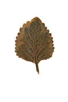 pressed leaf (mary jo hoffman)