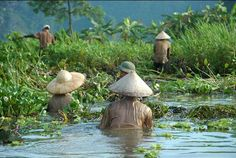 Vietnamese daily life. Why wouldn't they take of their shirts when working? I wonder how much they get paid.