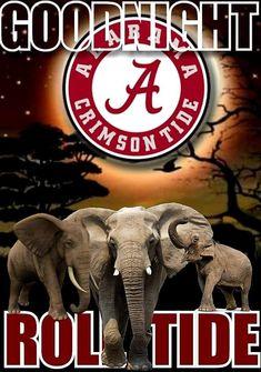Alabama Football, Alabama Crimson Tide, Roll Tide, Cat Breeds, Elephant, Cats, Cat, Gatos, Elephants