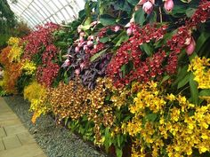 Orchid Show NYC 2012 [Stunning photos]