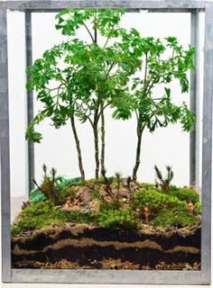 Forest Terrarium // Little people // Hippies // Jogger // Geometric Glass Lantern Terrarium // Home and Living // Indoor Garden