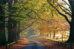 Mote Park, Maidstone