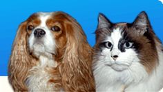 Pet Care Naturally - entire website filled with natural remedies for your pets!
