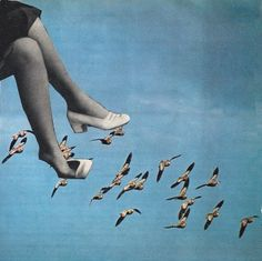 Rhed Fawell - 'Flyway' Collage 2014