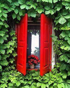 lush red and green - photo: @luciana.cobelli Location: Campolongo - Italy