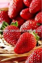 Whole Lifestyle Nutrition - Organic Recipes & Holistic Recipes Strawberry Garden, Strawberry Patch, Strawberry Plants, When To Plant Strawberries, Strawberry Fields, Growing Tomatoes, Baby Tomatoes, Green Tomatoes, Beautiful Fruits