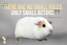 """""""There are no small roles. Only small actors"""" - Peaches. The #AcademyAwards are on tonight! Who's excited {Hint: Our furry friends are.} Stay tuned for some fun #Oscars-themed posts. . . . . #guinapig #cavie #hamster #rabbit #dogsofinsta #funny #oscars #oscar #love #cute #cutie #adopt #adoptdontshop #humanesociety #hsbroward #florida #miami #broward #fortlauderdale #charity #nonprofit #movies #awardsnight #rescue #animal #pet"""