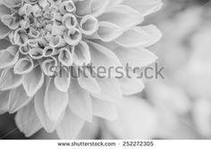 Nature Black White Stockfoto's, afbeeldingen & plaatjes | Shutterstock