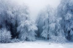 As a true nature enthusiast, I love strolling through the woods taking pictures of different forest atmospheres. Therefore, I'd love to invite you to share your beautiful forest photography with me and other readers. Winter Szenen, Winter Love, Winter Magic, Winter White, Winter Trees, Snowy Trees, Snow White, Landscape Photos, Winter Wonderland