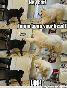 hey cat imma boop your head