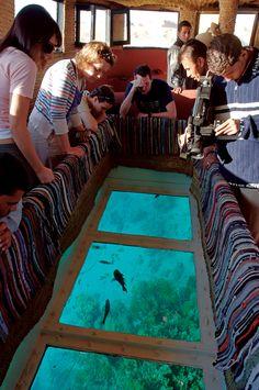 Take a trip on a Glass Bottom Boat - El Gouna, Egypt #visitelgouna #sunmaster
