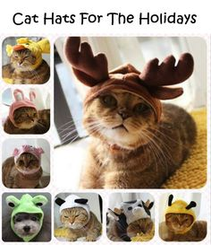 Cat Hats For The Holidays - http://diyideas4home.com/2013/11/cat-hats-holidays/ The bottom left picture is a dog not a cat