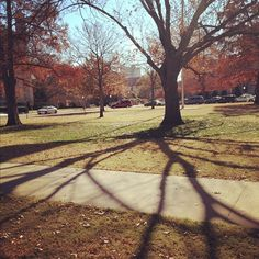 North Oval on a fall day. Autumn Day, Fall, Boomer Sooner, University Of Oklahoma, Winter Is Coming, In A Heartbeat, Beautiful Day, Country Roads, College