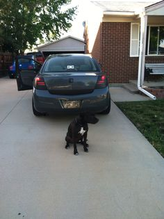 Tail lights illuminated with turn signals and my dog diesel lol