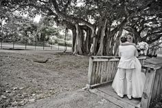 Banyan tree wedding photo // black and white bride and groom captured by Heather Funk Photography in Miami, FL