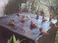Hummingbird Pool Party
