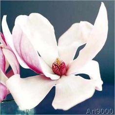 Amélie Vuillon - Magnolia