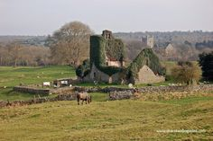 Jerpoint Park Co. Kilkenny where you can discover the amazing deserted medieval town of Newtown Jerpoint. Wonderful place to explore, there is an entry charge of €8 per adult, children under 12 are free. A must-see if you are in the south-east of Ireland.