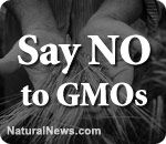 Monsanto-funded 'No on 37' campaign fabricates FDA quote, engages in criminal misconduct  Friday, October 26, 2012 by: Ethan A. Huff, staff writer        Learn more: http://www.naturalnews.com/037699_Monsanto_criminal_misconduct_No_on_37.html#