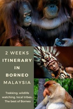 23 of the Best things to do in Borneo in Sabah, Sarawak, Kalimantan and Brunei. Covers both Malaysian and Indonesian Borneo. Find out about the best activities in Borneo and the best places to visit to make your backpacking Borneo trip just awesome! Borneo Travel, Malaysia Travel, Asia Travel, Travel Tips, Travel Destinations, Travel Guides, Malaysia Itinerary, Travelling Tips, Solo Travel