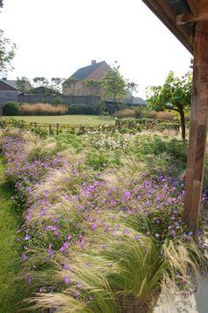 Grasses and flowers mixed in border Garden Landscape Design, Landscape Architecture, Garden Landscaping, Love Garden, Dream Garden, Small Gardens, Outdoor Gardens, Prairie Garden, Woodland Garden
