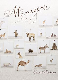 Menagerie, a new book from animal portrait extraordinaire Sharon Montrose.