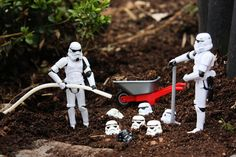 Plantando clones