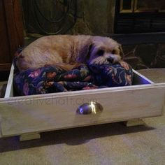 perfect bed for prissy pants!
