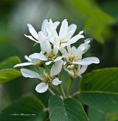 White Wild Flower by Sam Sherman in WyomingSpring on Photography By Sherman's Store