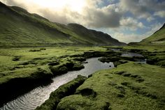 Flowing brook in lush green valley.