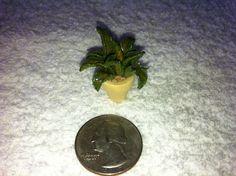 Tiny clay fern