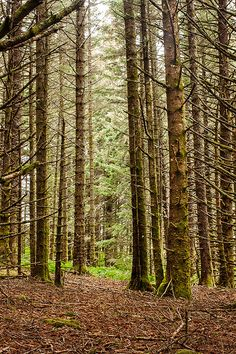 Forest Photo Forest Photography Forest Wall by GriffingPhotography