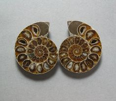 fossil AMMONITE matching pair two 41X49mm cabochons by uniquegem, $20.00