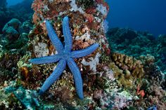 19 bizarre and beautiful starfish species What's so crazy about a 6 pointed star? Perhaps it's a Star of David/ Sea Star