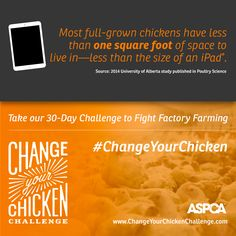 A 30 day challenge to Fight Factory Farming