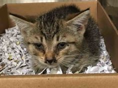 **UPDATE 10/3  IN FOSTER CARE**  WEEK OLD KITTEN WITH URI - NEEDS FOSTER Urgent - Manhattan