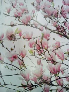 Behang, magnolia.