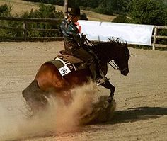 Reining - is a western riding competition for horses where the riders guide the horses through a precise pattern of circles, spins, and stops........