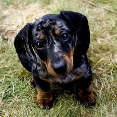 And let's not forget my would-be Oscar Meyer Weiner Dog!