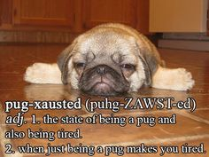 pugxausted