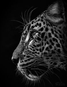 Animals Black And White, Black White Art, Black And White Drawing, Dog Pencil Drawing, Cheetah Drawing, Realistic Animal Drawings, Jaguar Animal, Eagle Images, Wild Animals Photography