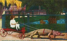 The California Alligator Farm (3627 Mission Road) in 1910. (Bizarre Los Angeles)