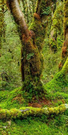 Routeburn Track, Fiordland National Park, NZ
