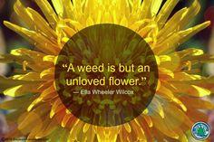 Flowering Wisdom | Gardening Quotes http://eaglesonlandscape.com/flowering-wisdom-gardening-quotes-29/