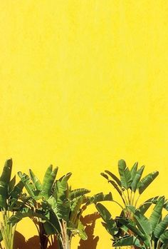 Yellow | Giallo | Jaune | Amarillo | Gul | Geel | Amarelo | イエロー | Colour | Texture | Style | Form | Sunny Palms by Happy Mundane