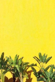 Sunny Palms by Happy Mundane